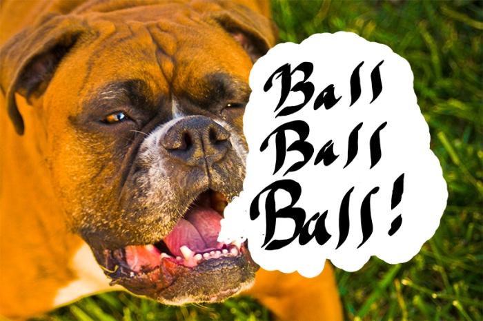BALL BALL BALL!
